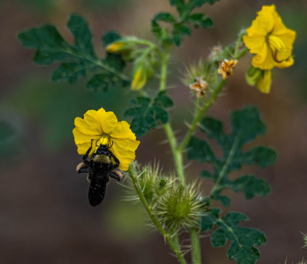 Bee and Flower Bloom